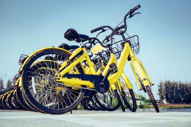 キャンパス内に駐輪する自転車