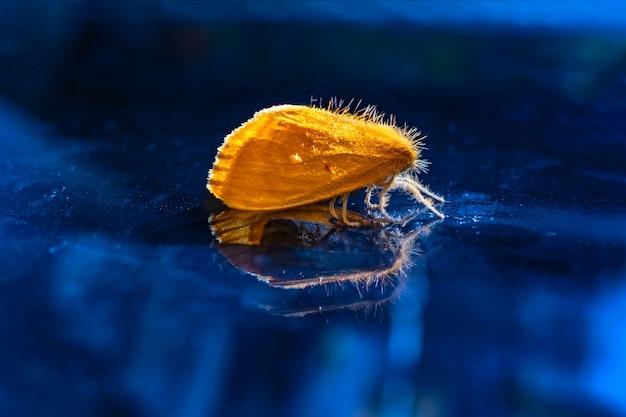 青い背景の黄色の毛むくじゃらの蝶
