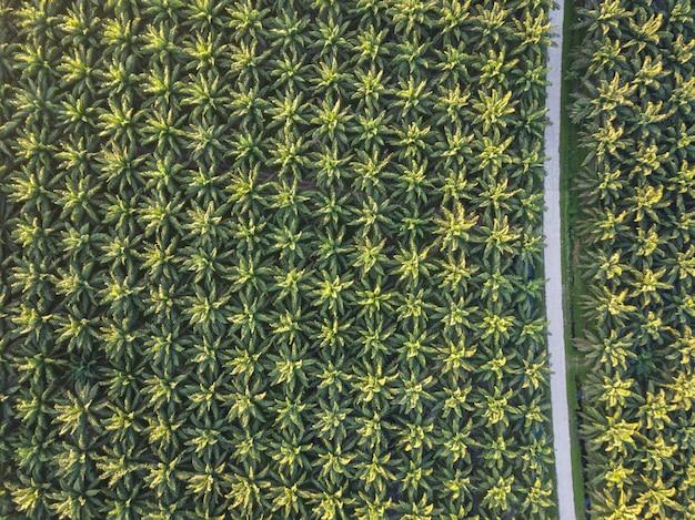 タイ、農業地域および植物製品の南部のヤシの木の畑の航空写真
