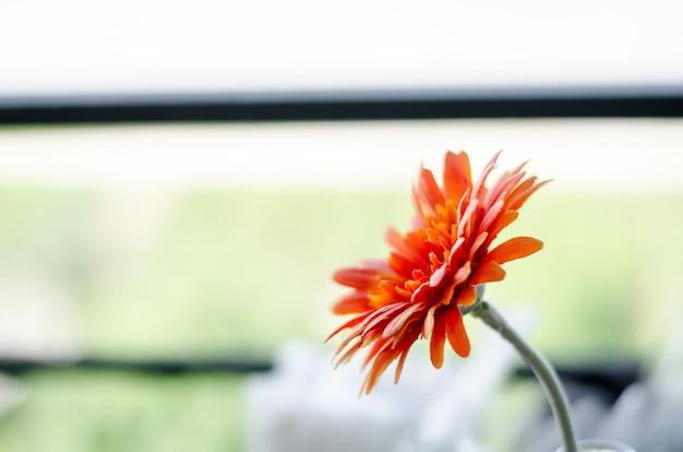 生地から作られたオレンジ色のジニアのエレガントな花のぼかし