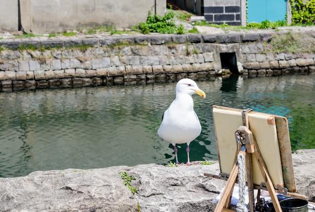 Чайка стоит над каналом отару.