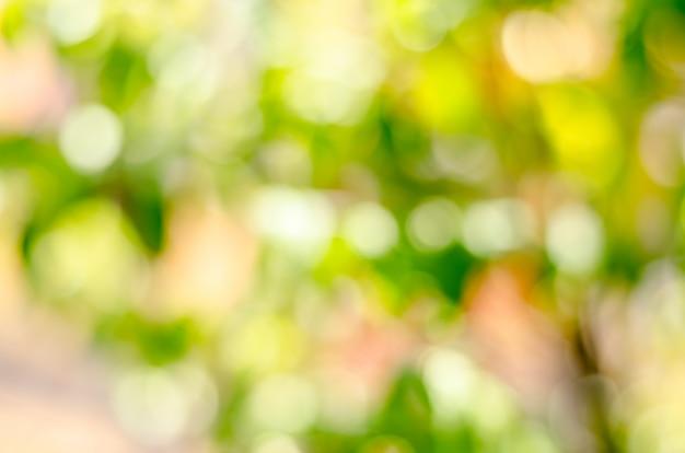 新鮮な状態と緑色の背景で緑の葉をぼかし