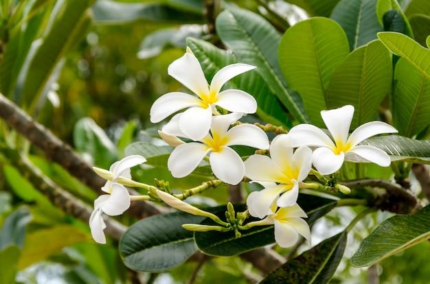 新鮮な花と緑の背景に緑の葉
