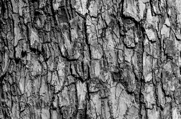 黒と白の樹皮のテクスチャーと樹皮パターン