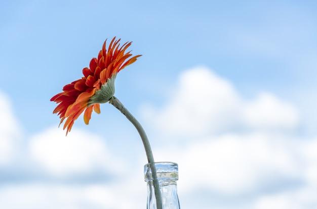 生地から作られたオレンジ色のジニアの花