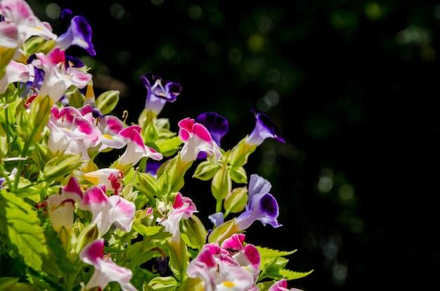 庭のピンクの花