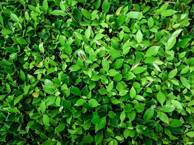 Зеленый лист абстрактный фон