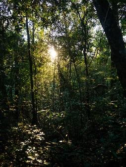 森に輝く光のビーム