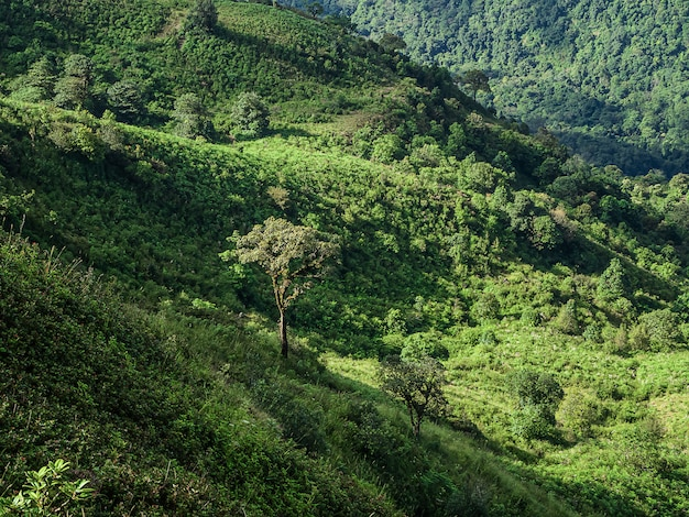 ドイインタノン国立公園、タイの山の風景