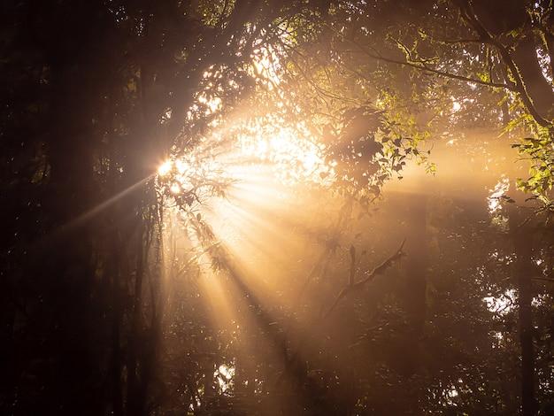 Утреннее солнце светит через лес