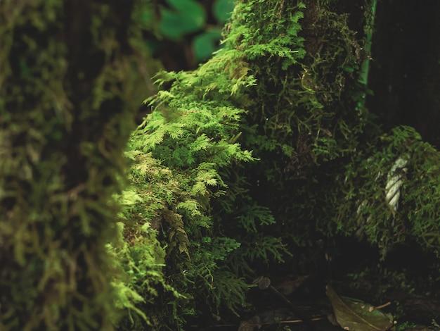 熱帯雨林のさまざまな植物のクローズアップ