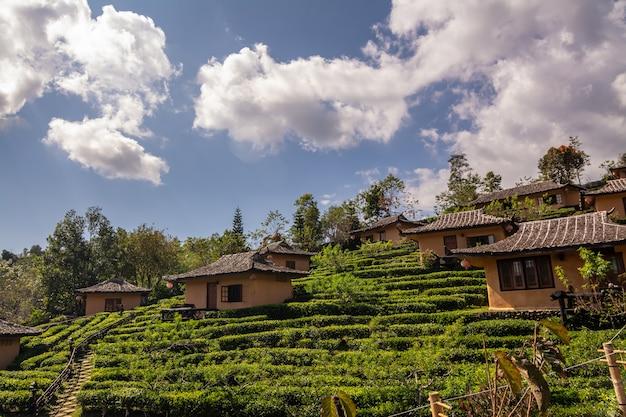 バンラックタイ、タイのメーホンソンでの茶畑の中で中国の村で日の出の間に美しい風景