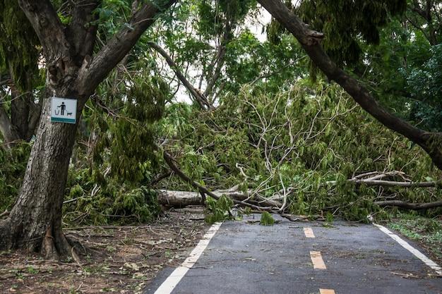 木は嵐の強さによって破壊された