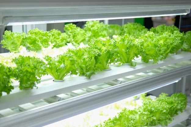 人工的な導かれたライトが付いているスマートな屋内農場で育つ植物。苗および栽培用植物ランプ