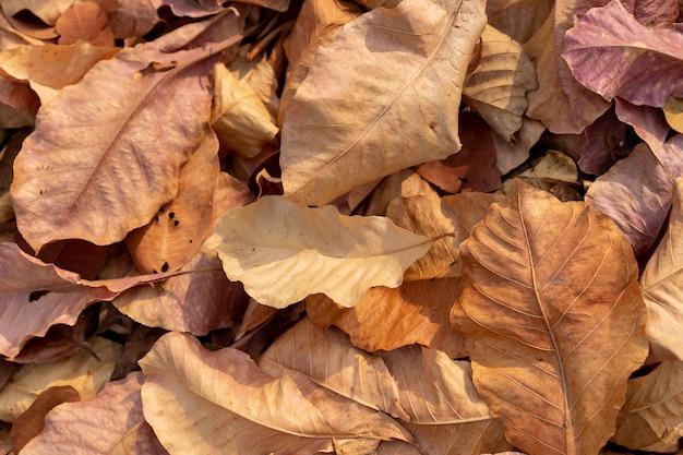背景に落ちた秋の乾燥葉の山
