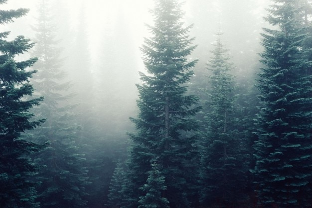 松上記の霧