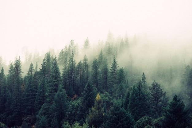森に来て霧