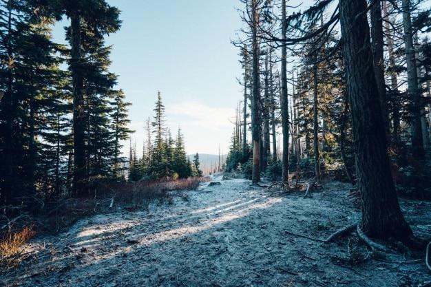 森の中で明確な