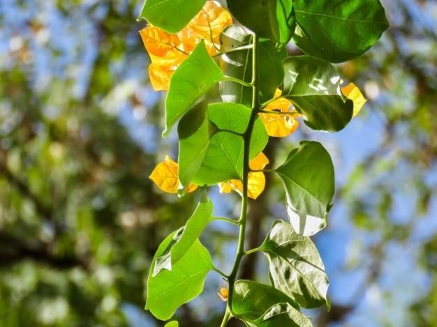 緑と黄色の葉