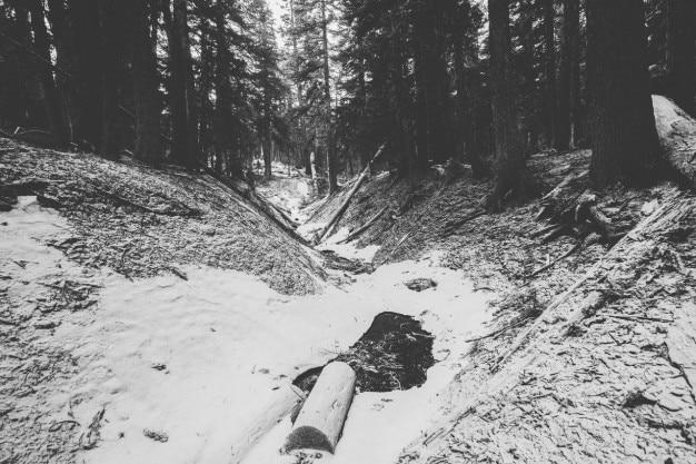 森の中の白い雪