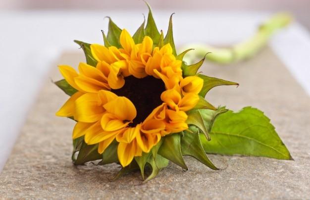 ぼやけた背景で黄色の花