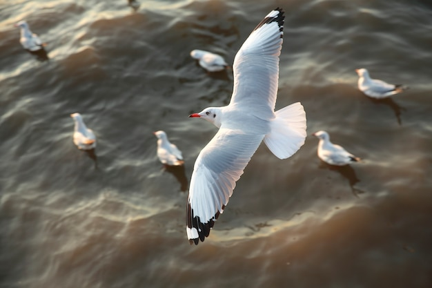 海で飛ぶカモメのトップビュー