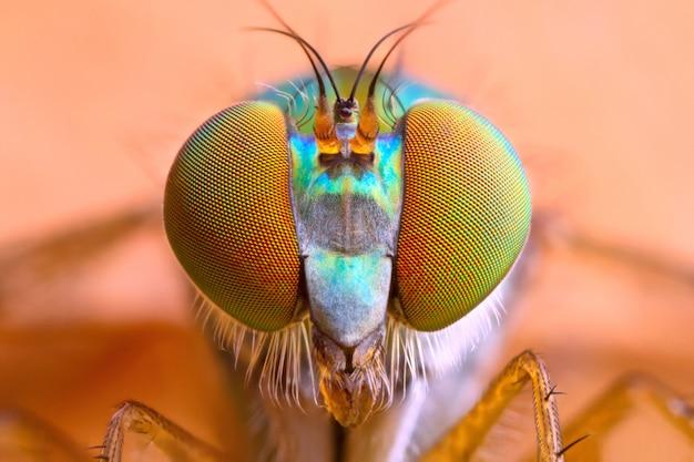 極端に拡大した長足のハエの頭と目