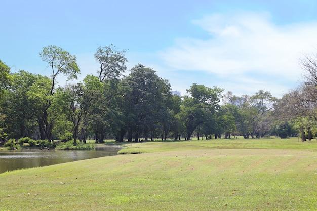 青い空と緑の木々のある屋外公園