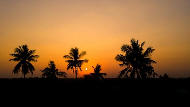 シルエットココナッツと夕日を背景