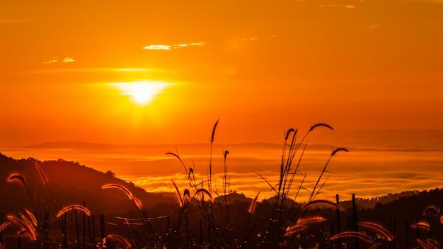 Пейзаж красочный в утреннее время на фоне восхода и тумана и силуэта травы на переднем плане