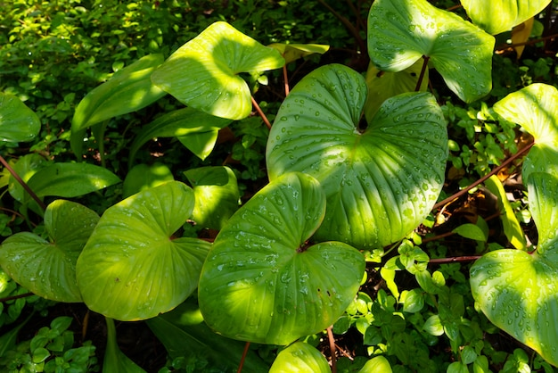 植物のテクスチャ