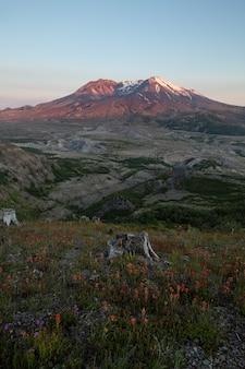 Гора св. елены закат и полевые цветы