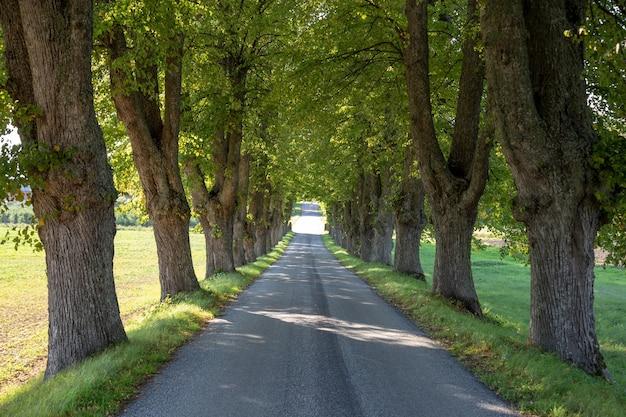 木が並んでいる田舎道。