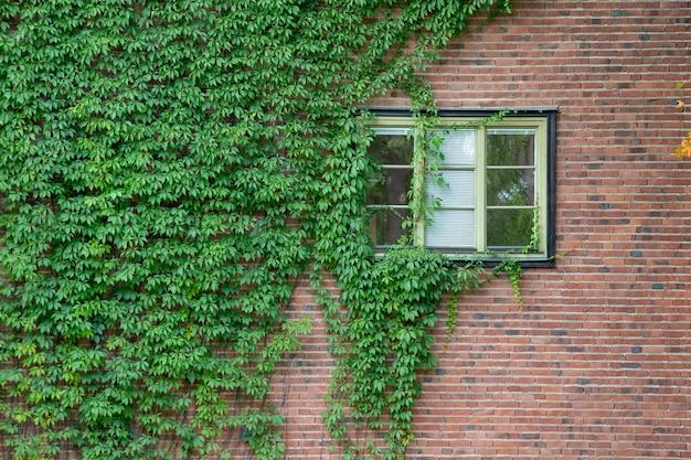 Листья на кирпичной стене для обоев или фона.