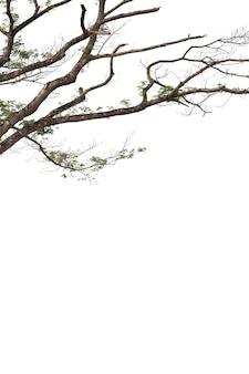 白い背景で隔離の枝。クリッピングパス