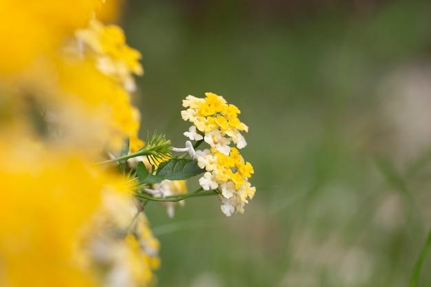 金の花の布