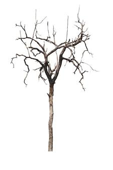 枯れ木や乾燥木を白で隔離されます。