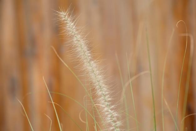 庭の草の花。メモリの概念。