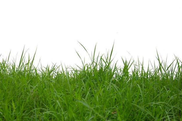 白い背景で隔離の草。