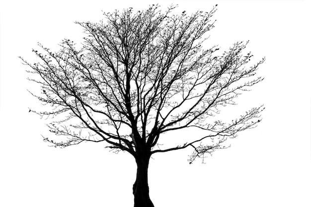 Силуэт мертвого дерева или сухого дерева