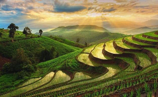 Террасное поле риса