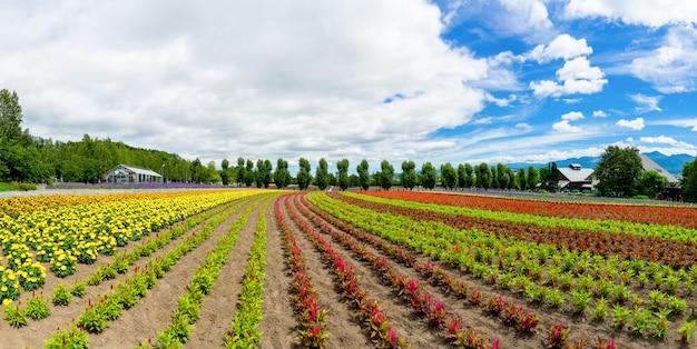 北海道富良野市のパノラマのカラフルな花畑と青空。