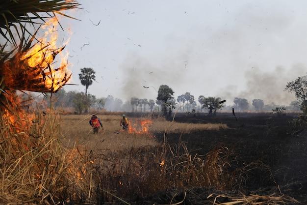 火は野原で燃えていました、そして、警官は火を消すのを手伝おうとしました