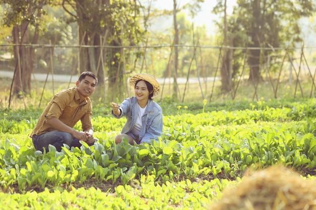 カップルの農夫は有機野菜の転換を気遣っています。カップルは、安全に販売できる野菜を栽培できてうれしいです。