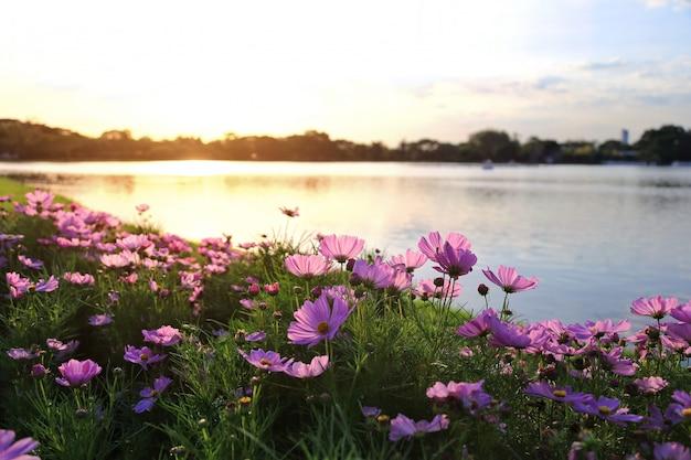Космос цветы и теплый свет