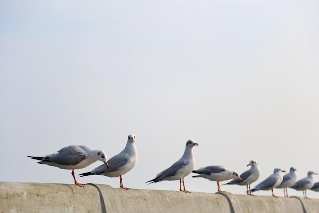 Чайки, стоя на пирсе, самут пракан, таиланд