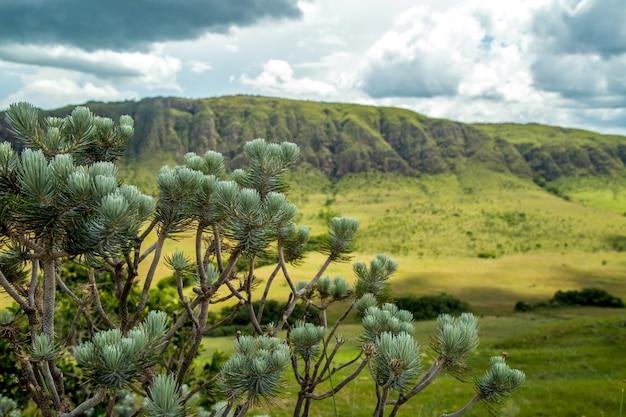 国立公園セラ・カナストラ・ブラジル