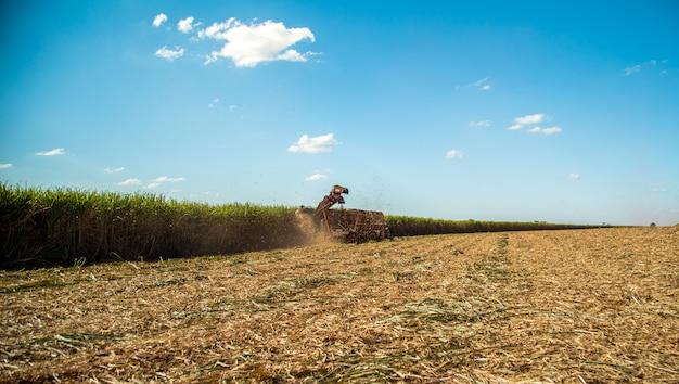 サトウキビ収穫農園
