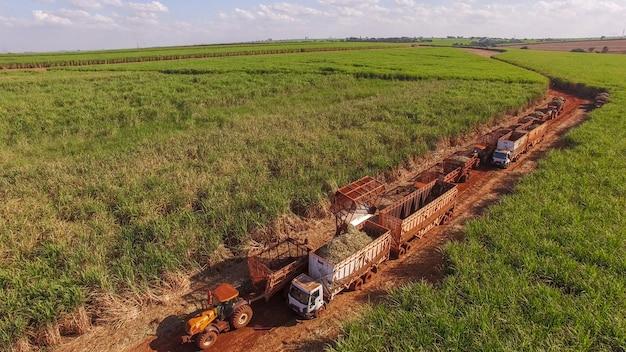 サトウキビ収穫栽培場面