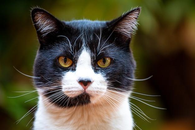 自然の中で美しい黒と黄色の猫